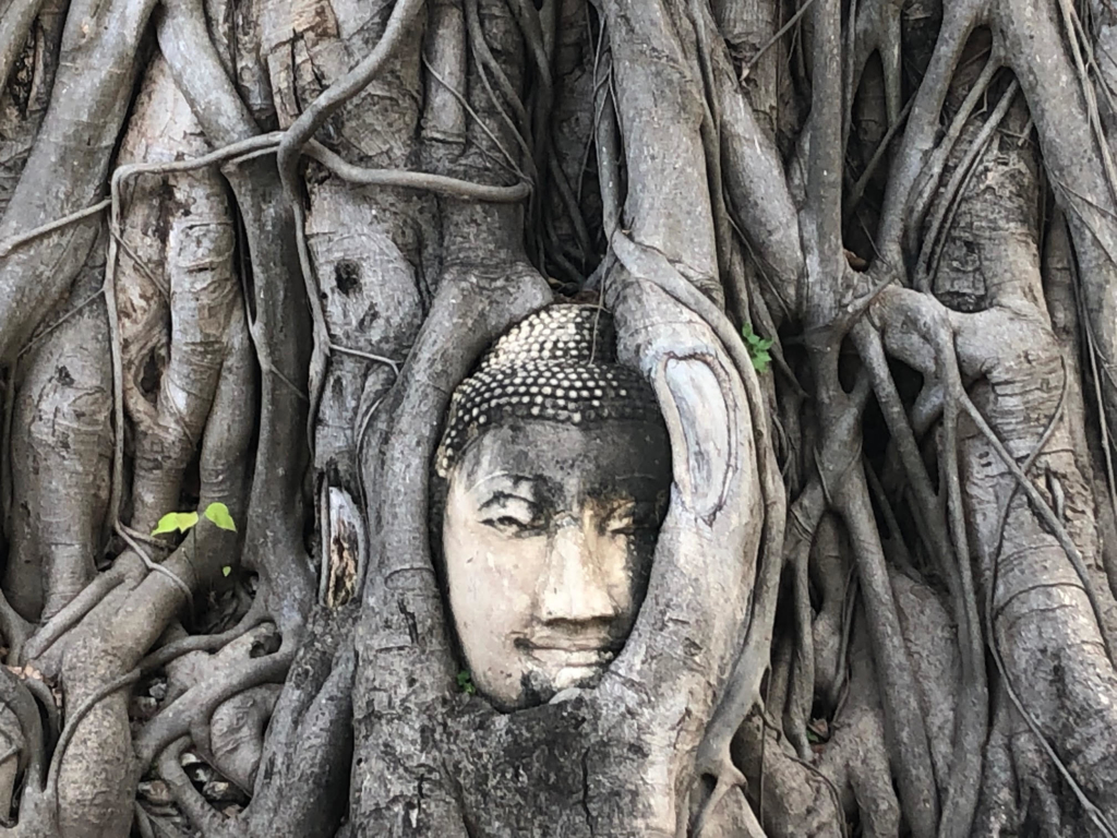 Thai statue after been engulfed by nature.
