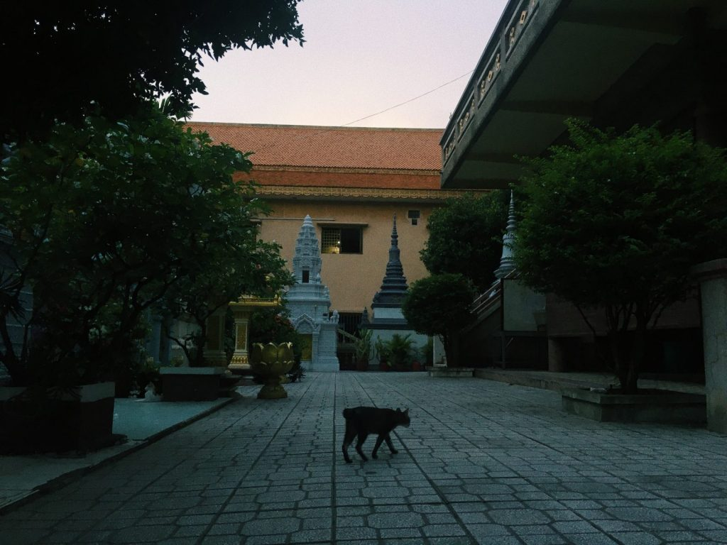 Black cat crossing the street in Cambodia